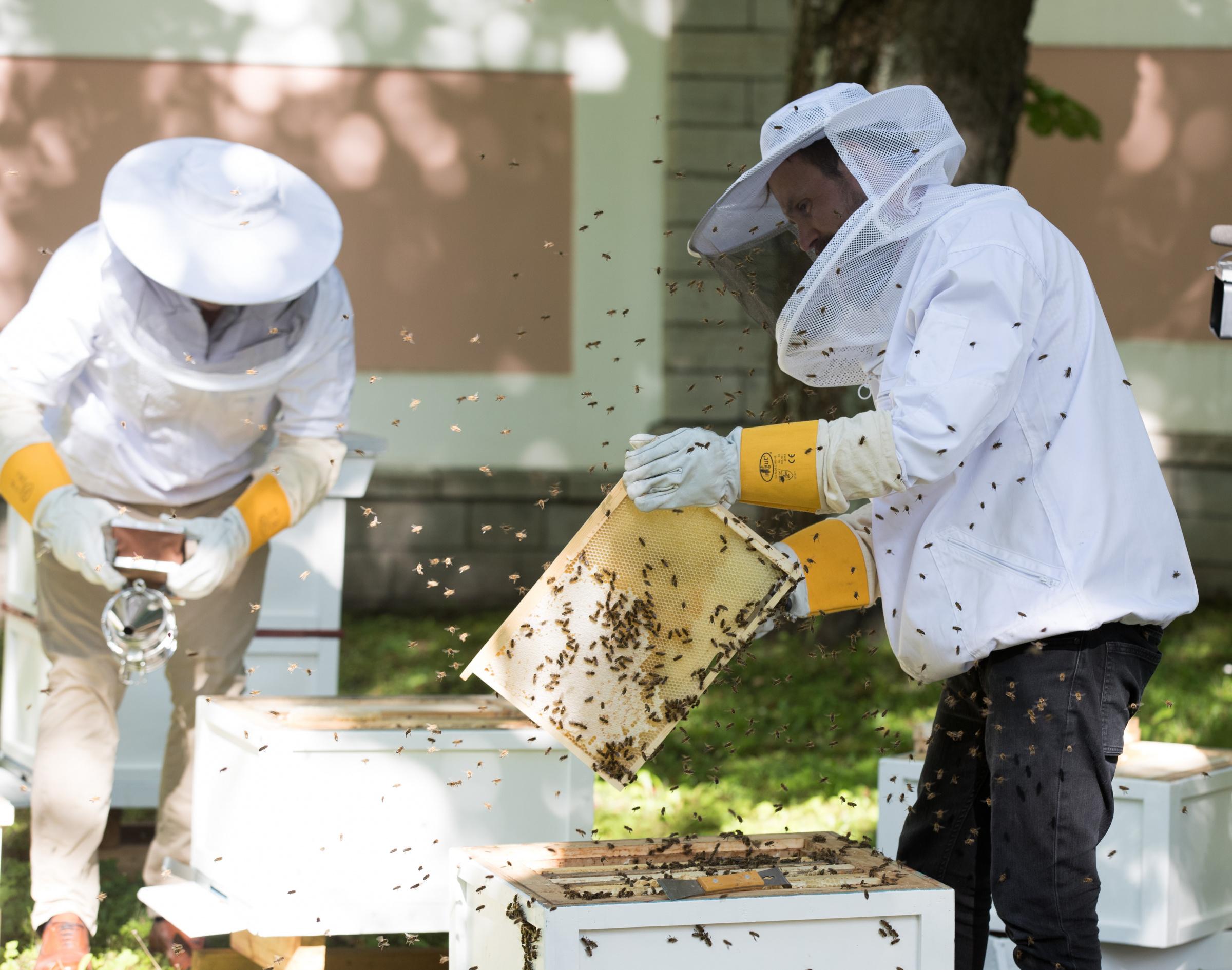 Mesilased, mee tootmine. Foto: LIIS TREIMANN/PM/SCANPIX BALTICS