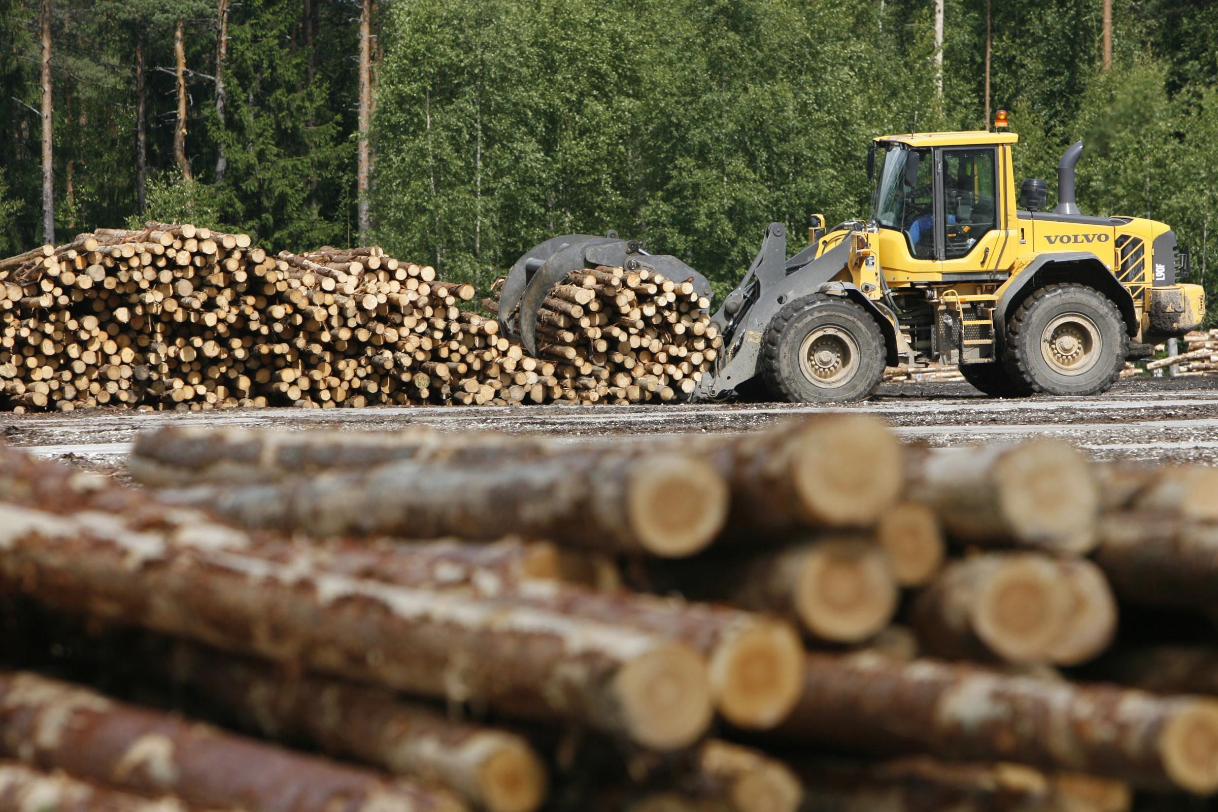 Puidutööstus. Foto: PEETER LANGOVITS/POSTIMEES/SCANPIX