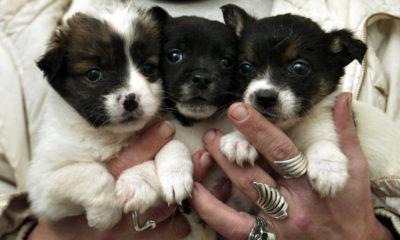 Kutsikad koerte varjupaigas. PM/SCANPIX BALTICS/TOOMAS HUIK