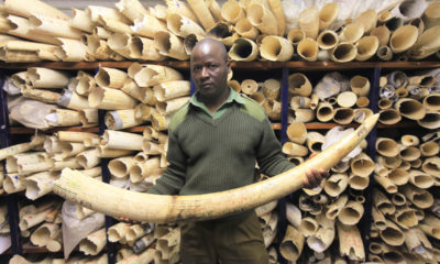 Zimbabwe, elevandiluu, elevantide võhad. Foto: AP/Tsvangirayi Mukwazhi